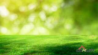 https://lokum.mielec.pl/oferta LOKUM Nieruchomości Mielec Działka biudowlana przy lesie Mielec